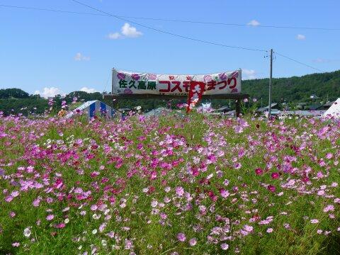 佐久コスモス街道201401.jpg