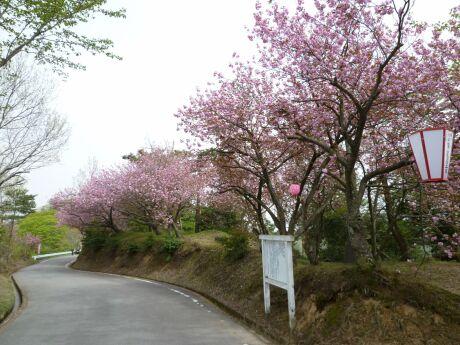 倶利伽羅峠 桜3.jpg