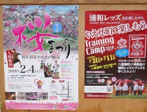 八重瀬城 桜3.jpg