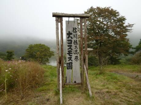 内山牧場 コスモス園.jpg