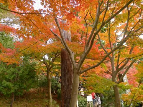 円覚寺の紅葉2.jpg