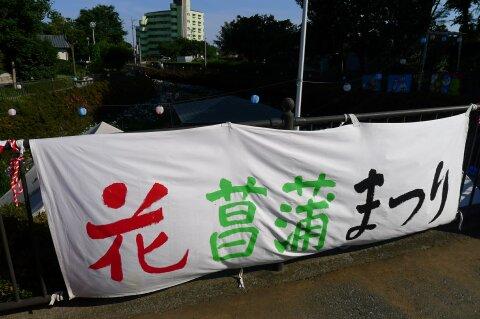 分水堀緑道の菖蒲.jpg