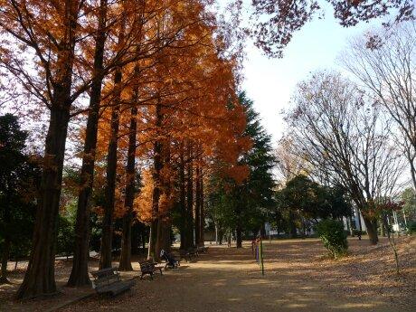 北浦和公園 紅葉1.jpg
