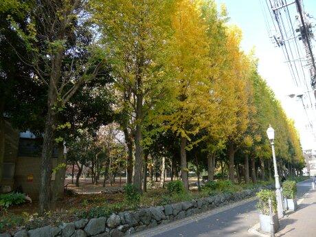 北浦和公園 紅葉3.jpg