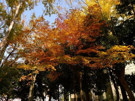 北浦和公園 紅葉5.jpg