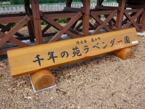 千年の苑ラベンダー園.jpg