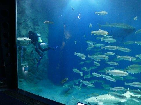 千歳水族館3.jpg