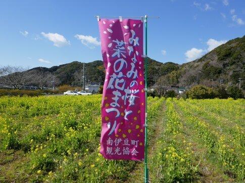 南伊豆菜の花まつり.jpg