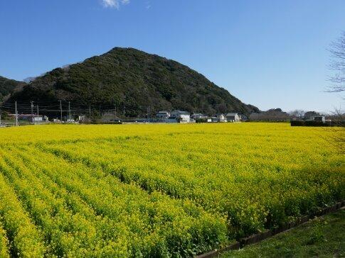 南伊豆菜の花まつり2.jpg