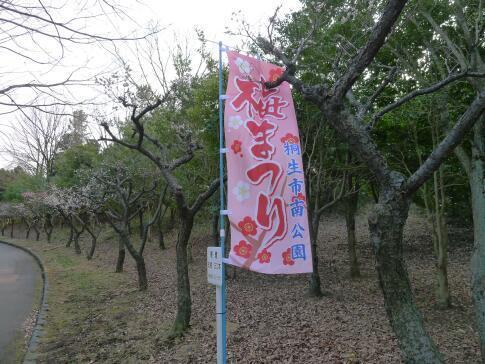 南公園の梅.jpg