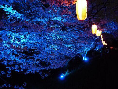 吉見百穴 桜ライトアップ3.jpg