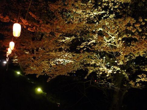 吉見百穴 桜ライトアップ7.jpg