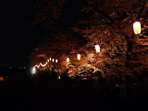吉見百穴 桜ライトアップ92.jpg
