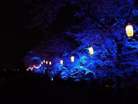 吉見百穴 桜ライトアップ93.jpg