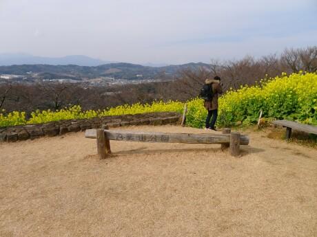 吾妻山公園 菜の花.jpg