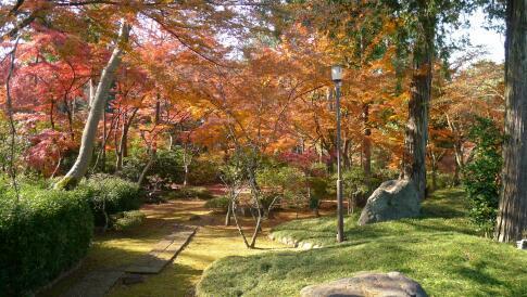 喜多院庭園の紅葉4.jpg