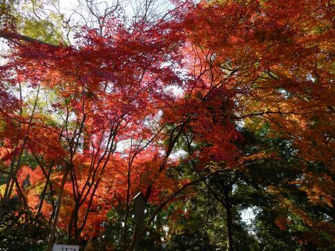 喜多院紅葉20152.jpg