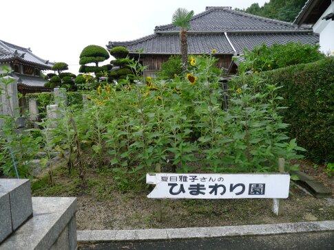 大楽寺  夏目雅子のひまわり園.jpg