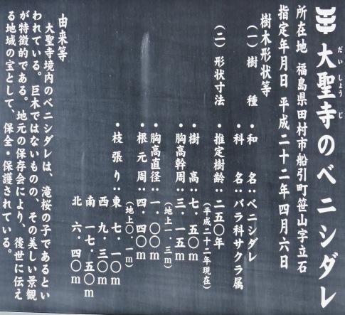 大聖寺のベニシダレ2.jpg