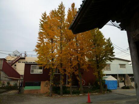 大聖寺の紅葉 越谷2.jpg