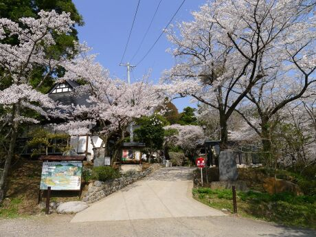 大蔵寺の桜4.jpg