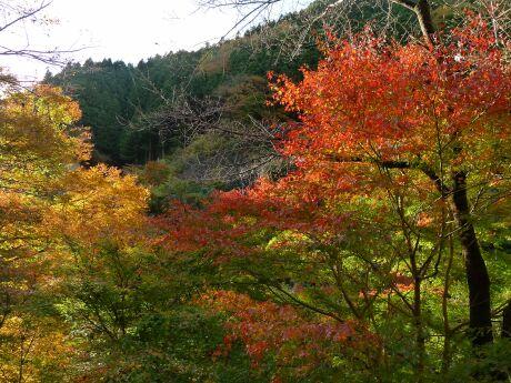 大血川渓谷の紅葉3.jpg