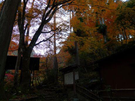 大血川渓谷の紅葉5.jpg
