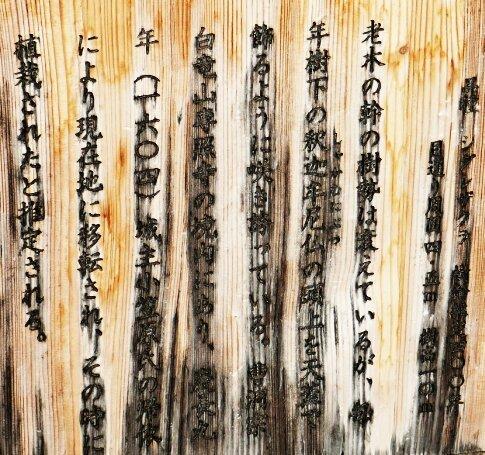 専照寺の枝垂れ桜2.jpg