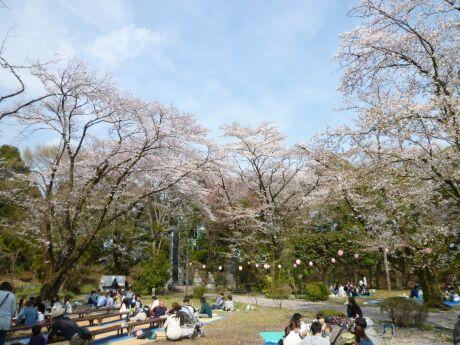 小山祇園城 桜2.jpg