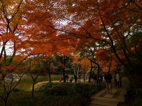 小石川後楽園の紅葉2.jpg