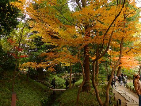 小石川後楽園の紅葉3.jpg