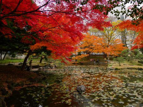 小石川後楽園の紅葉4.jpg