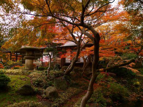 小石川後楽園の紅葉5.jpg