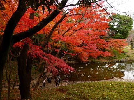 小石川後楽園の紅葉6.jpg