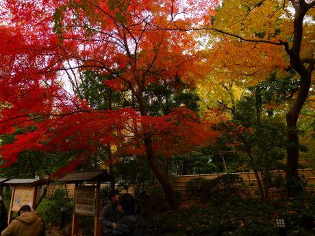 小石川後楽園の紅葉1.jpg