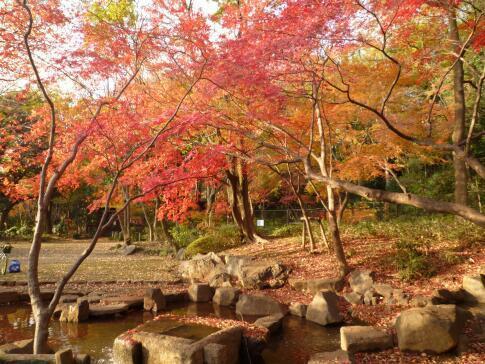岡本公園の紅葉4.jpg
