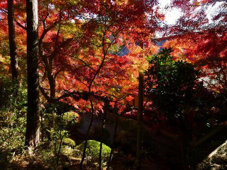 崇禅寺紅葉201201.jpg