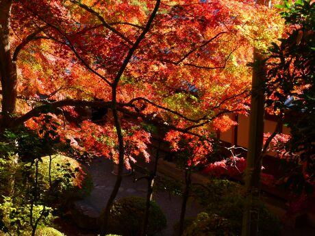 崇禅寺紅葉201202.jpg