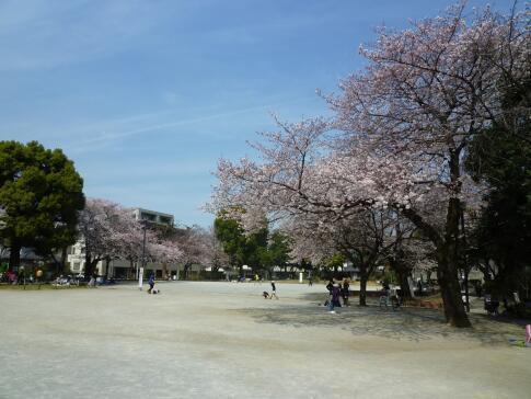平和公園 桜4.jpg