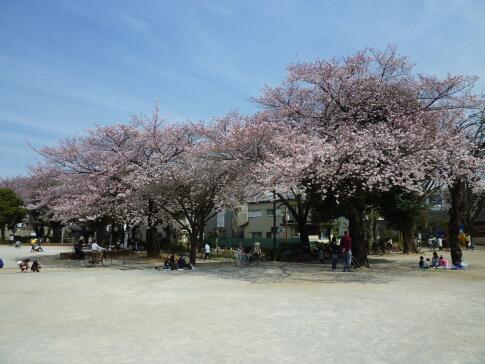 平和公園 桜5.jpg