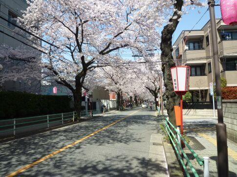 府中桜通り2.jpg