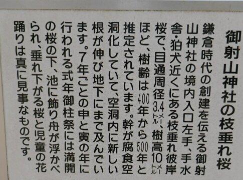 御射山神社の桜看板2.jpg