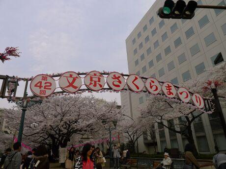 播磨坂の桜.jpg