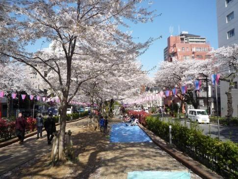 播磨坂の桜20192.jpg