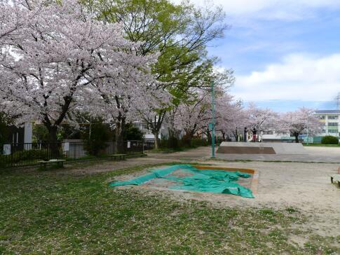 新福寺公園の桜3.jpg