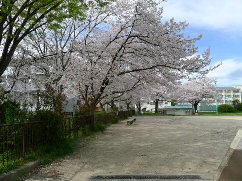 新福寺公園の桜4.jpg