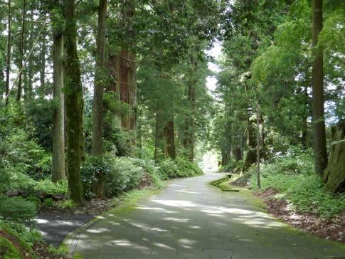 日光街道杉並木公園2.jpg