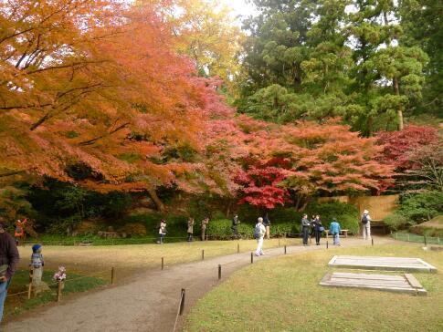 明月院庭園の紅葉4.jpg