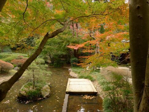 明月院庭園の紅葉1.jpg