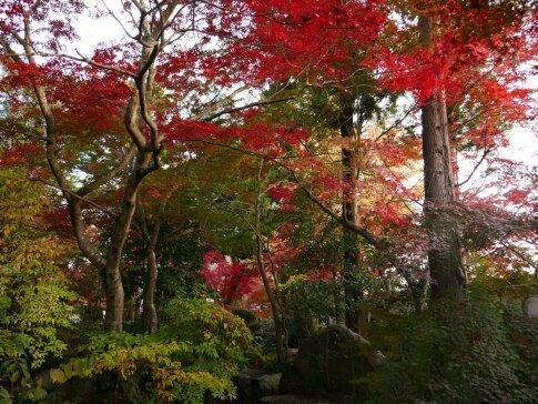月山寺の紅葉3.jpg